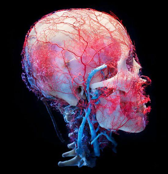 Bodies & Skulls by James Bareham