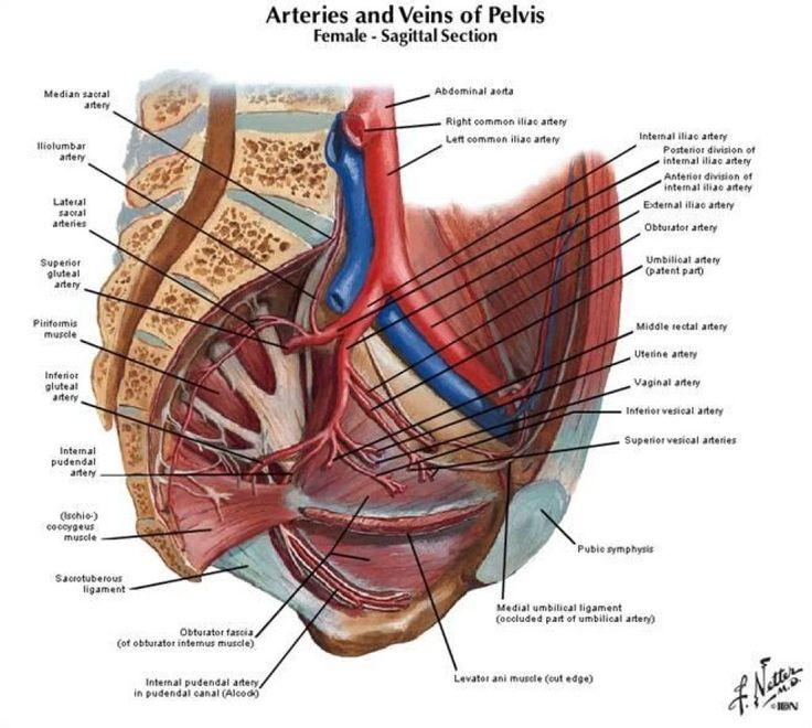 15 besten ascending colon Bilder auf Pinterest | Menschlicher körper ...