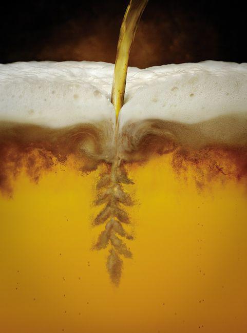 Barley in beer bu Ray Massey