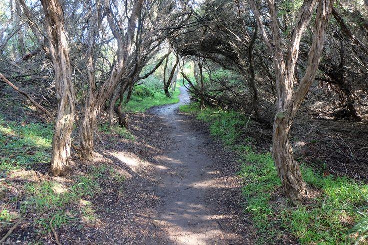 https://flic.kr/p/WUDTi9 | DSCF3033 | Walking tack from Cape Shank Lighthouse to Bushrangers Bay, Victoria.