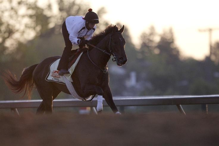 Kentucky Derby winner Orb preps for the Preakness (Photo: Jonathan Ernst / Reuters)