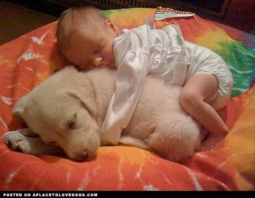 This beby and pup is so cute! I wanna do this with my baby!