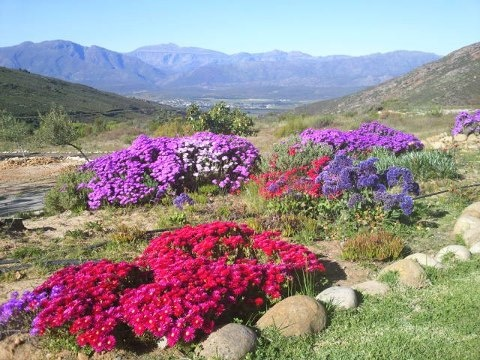 One month away from my South Africa trip!!  This is one of the places I'll be staying! Piekenierskloof Mountain Resort SA