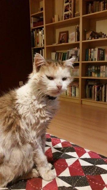 Skitz est une chatte isabelle de 13 ans. Elle est adorable et pourtant elle est abandonnée et doit être soignée pour une insuffisance rénale. La pauvre petite ne peut compter que sur nous. Sa nourriture spécifique représente un poste lourd pour le budget de l'association Les Chats du Quercy. Il est urgent de lui venir en aide car la nourriture vétérinaire dont elle a besoin doit être renouvelée et l'association n'en n'a pas le financement.