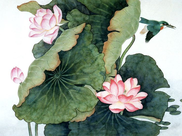 free online pictures 03290 lotus leaves lotus flowers pictures paintings , pics