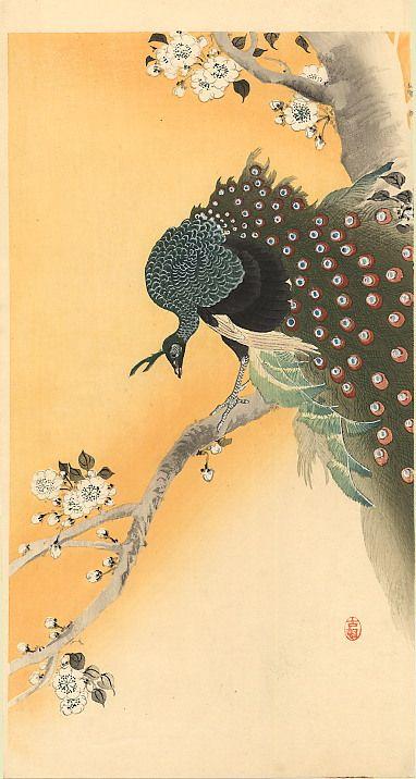 Peacock - Ohara Koson