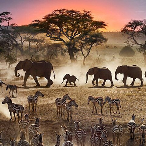 Photo by @stephenwilkes: A small portion of my final Day To Night of Serengeti National Park in Tanzania.