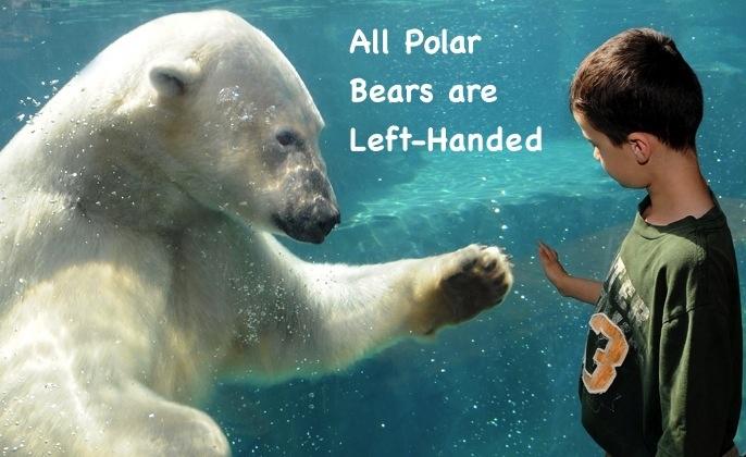 Polar Bears Left Handed   lefties   Pinterest