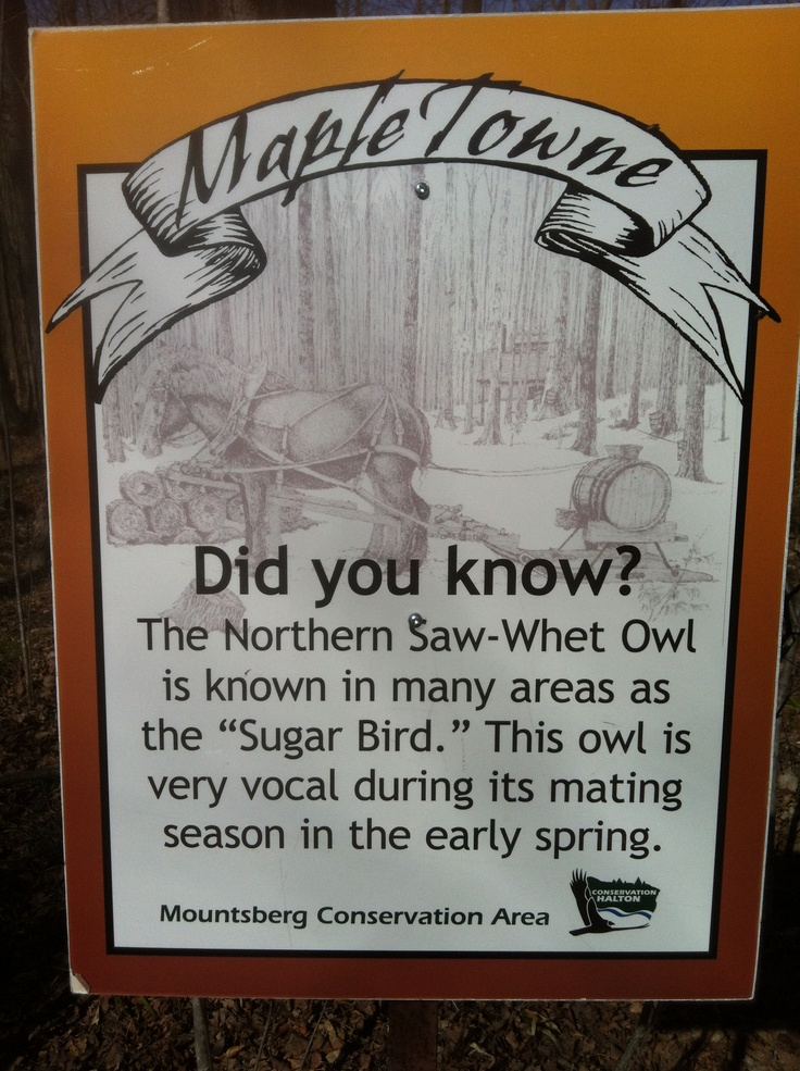 Did you know that Mountsberg is not only famous for Maple Syrup but also for being a Bird Sanctuary? No angry bird here though!