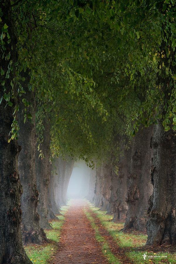 ~~Forest path   what lies beyond the fog   by Lars van de Goor~~