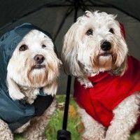 #dogalize Cómo hacer un chubasquero para perros #dogs #cats #pets