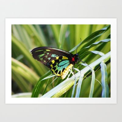 Butterfly 3 Art Print by Sheridan van Aken - $20.80