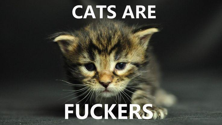 Les chats sont des enfoirés! (CATS ARE FUCKERS)