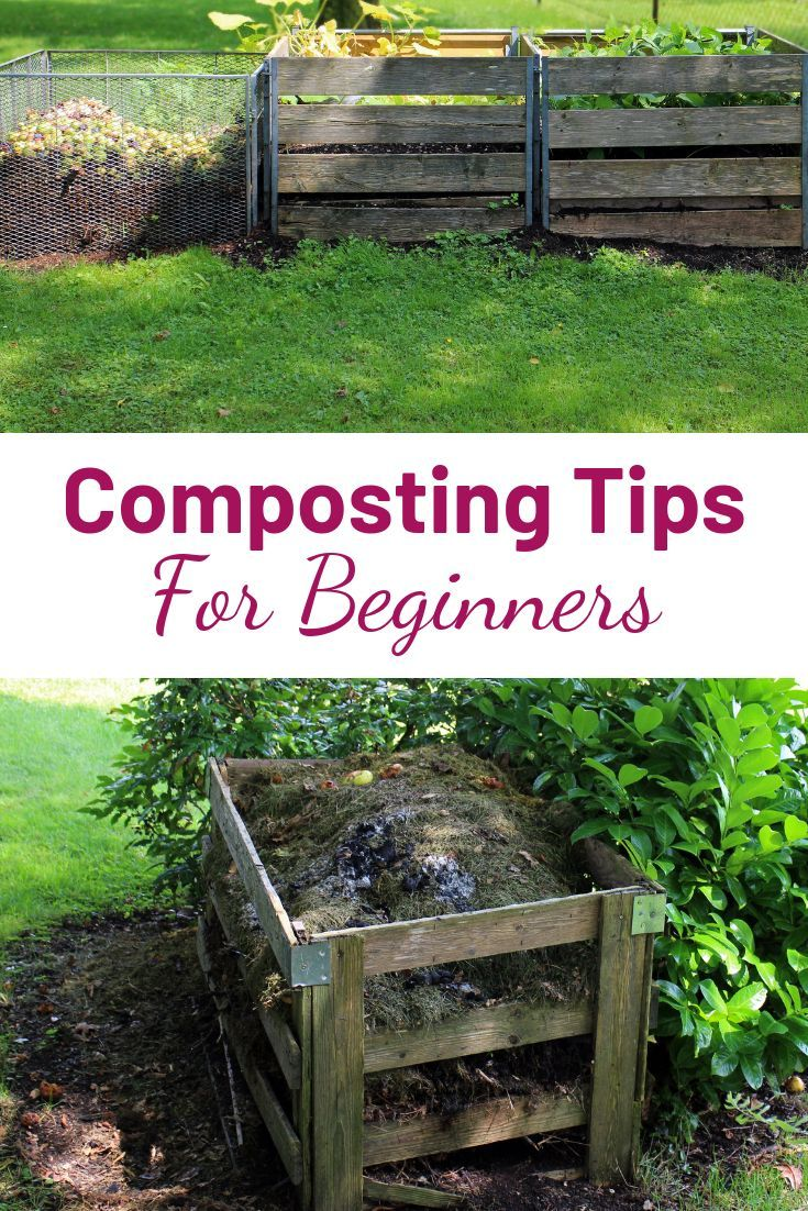 Compost Tips For Beginners Home Vegetable Garden Vegetable