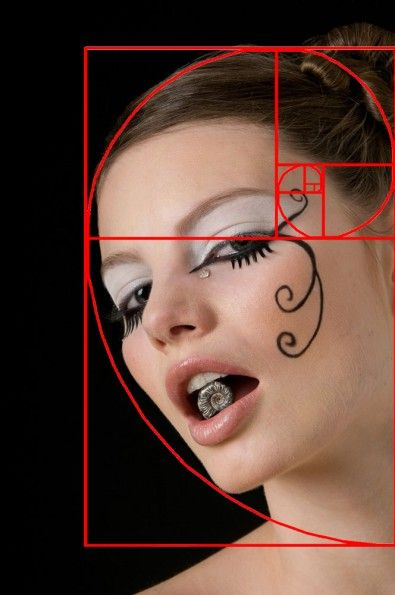 Ten Ways to Take Better Photos Without Spending More Money:  The Golden Spiral Nautilus spiral and Ediely