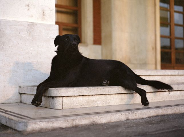 Nivero from portraits of Stray dogs of Palermo series, Charlotte Dumas