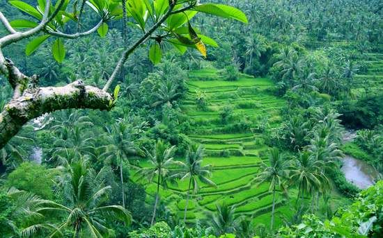The charm of Bali as the island of gods