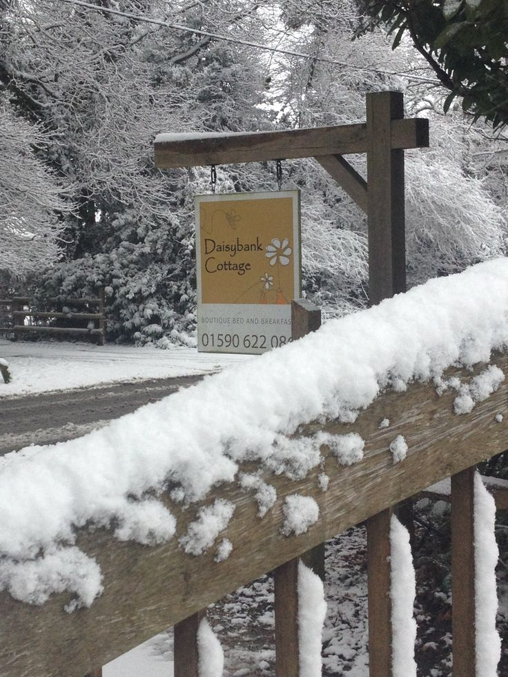 always a warm welcome! Especially in the snow at Daisybank Cottage New Forest