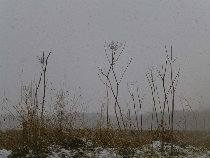 field and hedgerow: December 2012