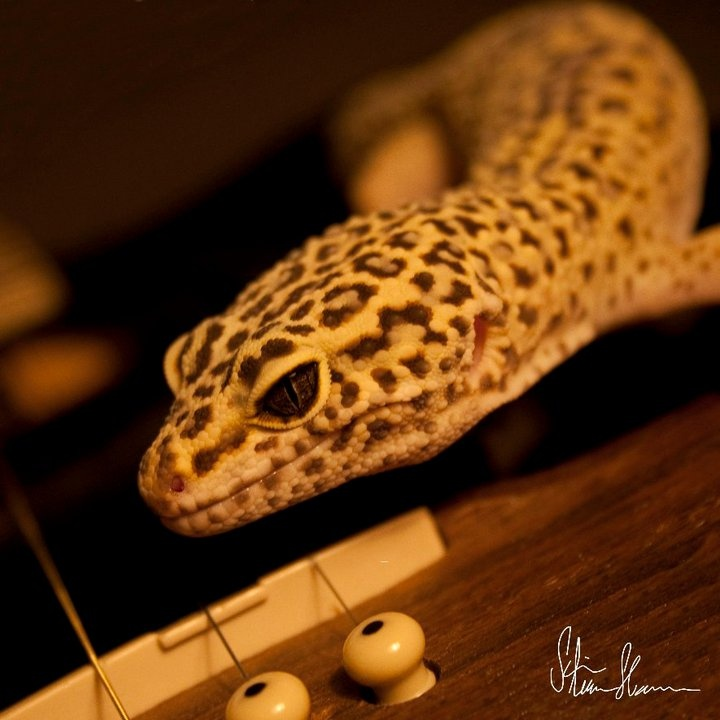 Foto-Gecko