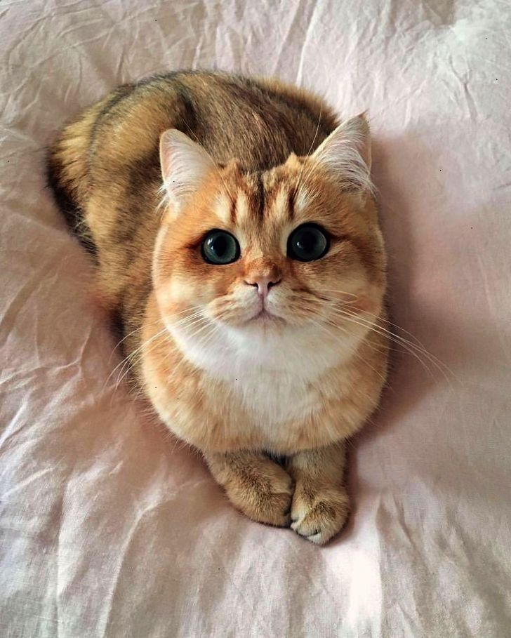 Pin Beautiful Cats Wallpapers Free Download Cool With Images