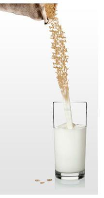 Ho scoperto il latte di riso e voglio farmelo sempre in casa! Altamente digeribile, contiene granuli di amido molto piccoli che contribuiscono a facilitarne la digestione eliminando l'eccesso di succhi gastrici e di gas intestinali, responsabili del tipico gonfiore all'addome. Adatto per chi soffre di intolleranza al lattosio e al glutine. Meglio se ricavato dal chicco integrale. #latte #riso #digeribilità #glutine #colazione #salute