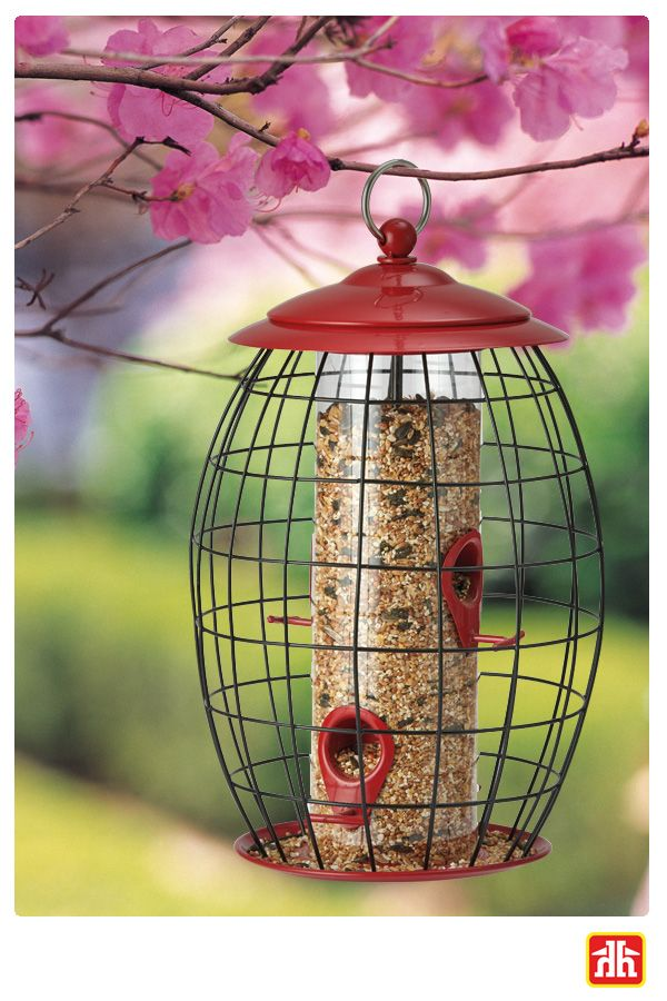 Attract the sweet sound of song birds to your backyard with this bird feeder. This bird feeder has a tray that catches seed and keeps is off the ground, producing no waste.