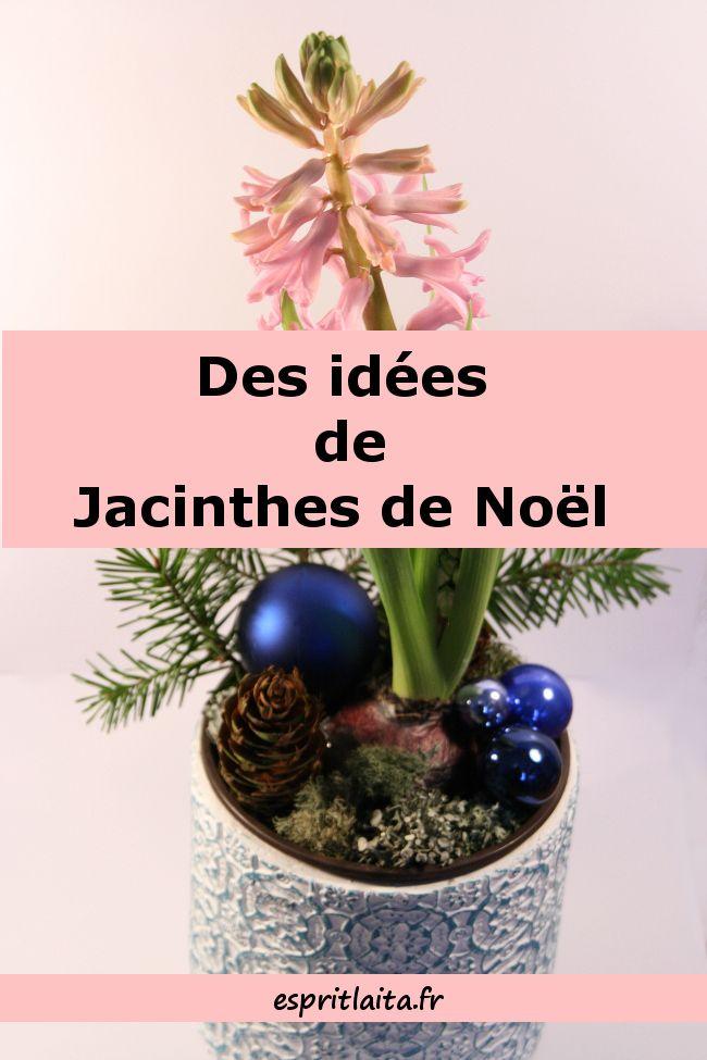 Des idées de décoration pour les jacinthes de Noël -On trouve facilement des jacinthes à partir de 1,50 euros. Ensuite, il suffit d'avoir un gros bol à céréales, un peu de mousse des bois ou du jardin, quelques pommes de pin et des petites décorations comme des mini-boules de Noël, des petits anges ou des elfes. On les trouvent généralement au fond du carton à décoration ou sur les étagères à bibelots. C'est simple, amusant, surtout avec des enfants