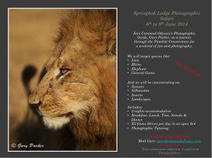 Springbok Lodge poster