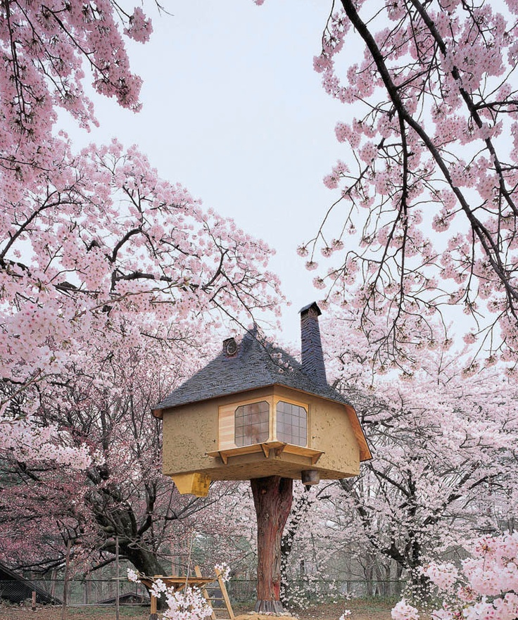 Treehouse by Terunobu Fujimori: Cherries Blossoms, Tree Houses, Favourite Things, Cottages Treehouse Cabin, Trees House, Blossoms Trees, Perfect Studios, Treehouse Playhouses, Teas House