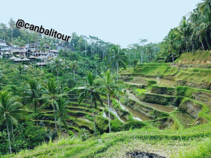 Tegallalang, Ubud-Bali