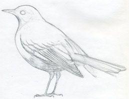 how to draw bird