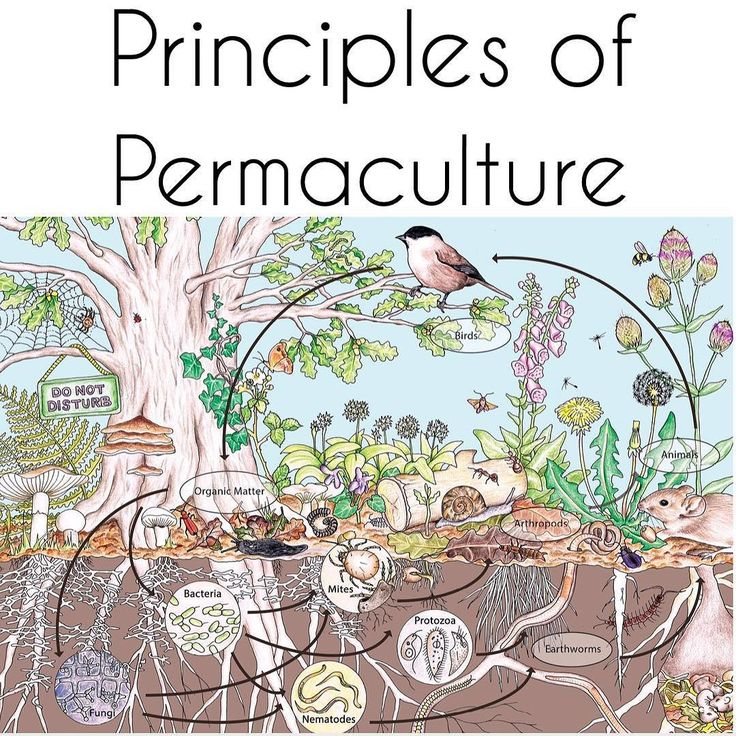 "permaculture-prowess: "" Principle 7: Design from patterns to details By stepping back, we can observe patterns in nature and society. These can form the backbone of our designs, with the details..."