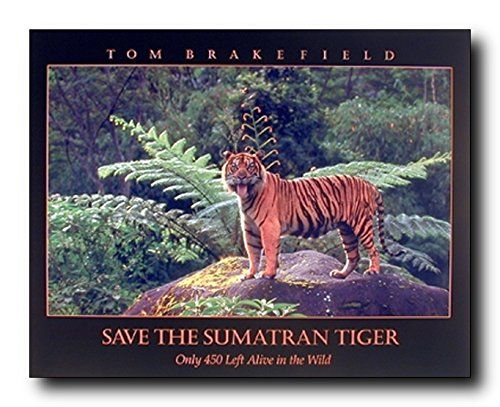 Add this wonderful piece of art into your home walls which will brings you many compliments from your guests for sure. This poster captures the image of tiger standing on a rock in between the forest and the quotation written is Save the Smatran Tiger which would surely grab lot of attention. It would be perfect gift for any tiger lover. This piece will add character and warmth to any home decor. Grab this beautiful poster for its durable quality with a high degree of color accuracy.
