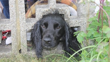 A cocker spaniel was rescued by a firefighter after getting its head stuck in a wall in Hampshire.    Owner Vicky Lovelock called for help after eight-month-old Lexi put her head through a hole in the wall in Porchester.    Animal rescue specialist Anton Phillips, from Hampshire Fire and Rescue Service, freed the dog using a hammer and chisel to crack the wall.