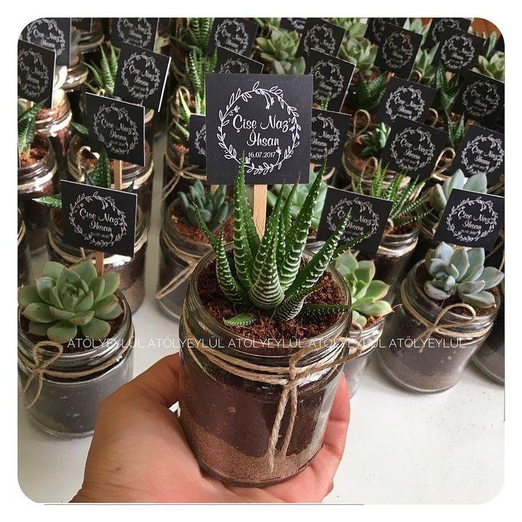 No filter needed✌🏻❣️#sukulent #succulents #kaktus #cactus #succulove #nikahsekeri #babyshower #disbugdayi #flowers #birthdaygift #kurumsalhediye #weddingfavour #bride #gift #favors #hediyelik #weddinggift #nişanhatırası #nişanhediyesi #sözhatırası #sözhediyesi #düğünhediyesi #düğünhatırası #kırdüğünü