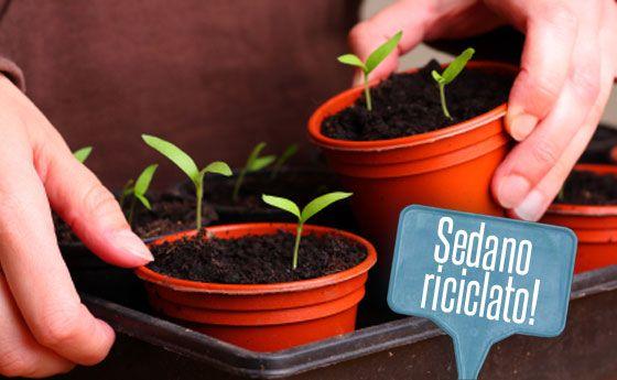 Orto in vaso: come far crescere il sedano riutilizzando i suoi scarti! | Giardinieri in affitto