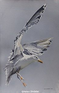 Coming in For a Landing by Helen Shideler Poured watercolor ~ 22 x 14.5