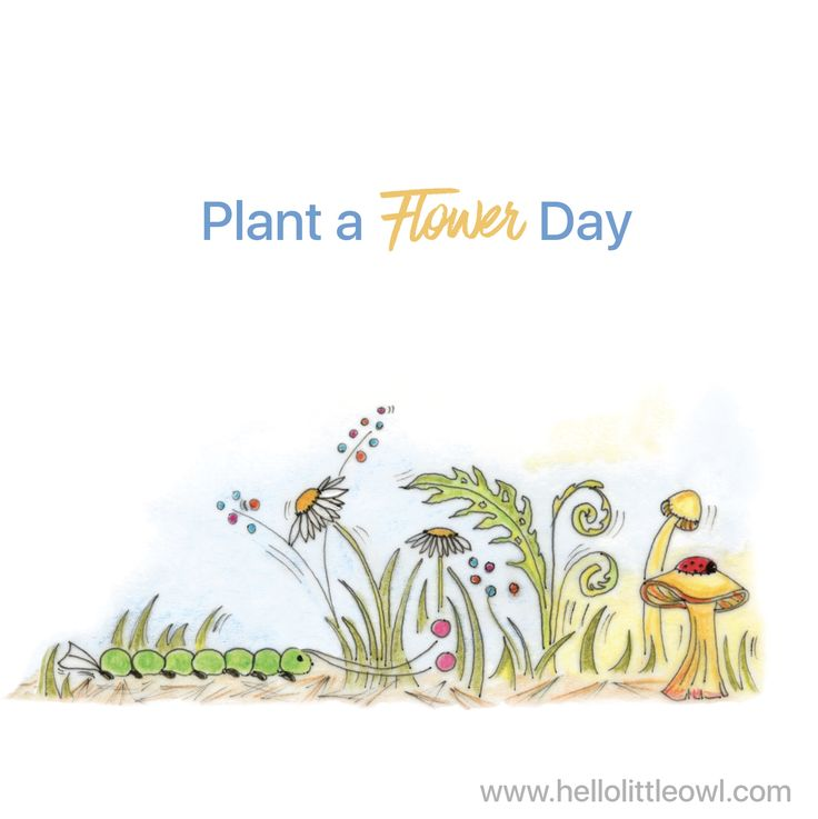 #plantaflowerday  Illustration by Mary Uihlein, author of Hello Little Owl Children's Book Series