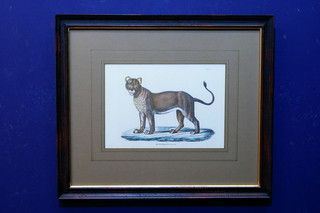 Antieke dierenprent van leeuwin 19656 op www.lansantiek.com