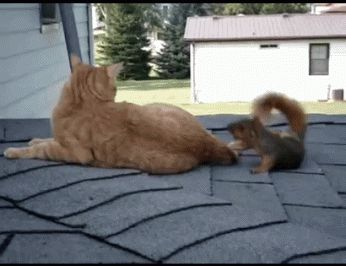 An oddly amenable cat playing with a squirrel. | 25 Animal GIFs That Will Warm Your Cold, Dead Heart