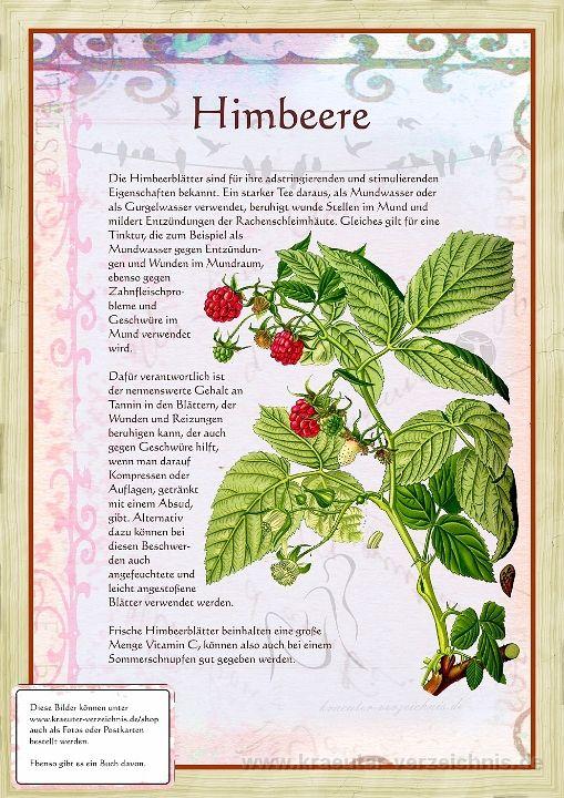 Bilder aus dem Buch Alte Heilkräuter-Zeichnunge…