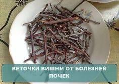 Любое заболевание почек быстро излечивается вишневыми веточками! - CELEBNIK. RU