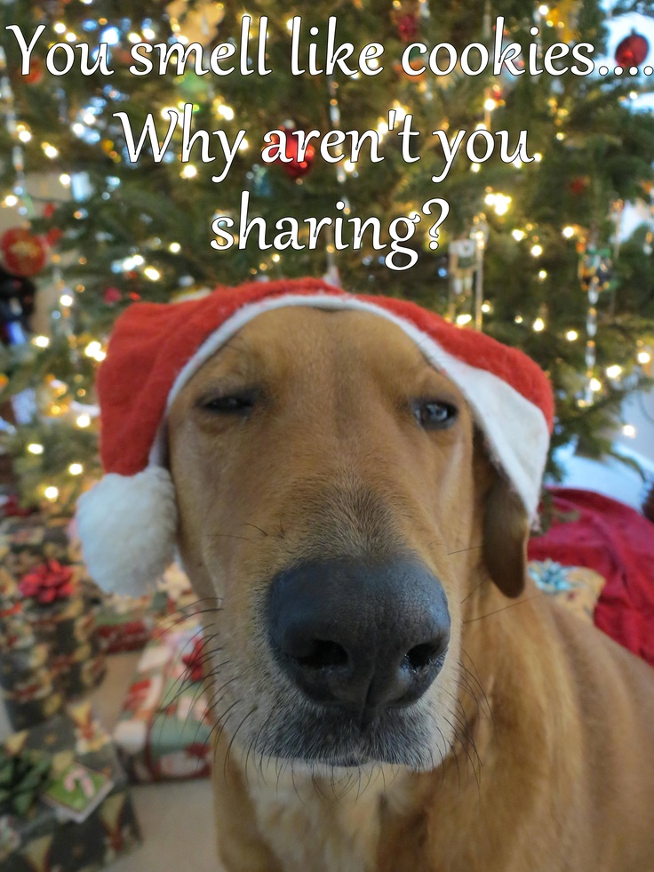 Share your cookies....