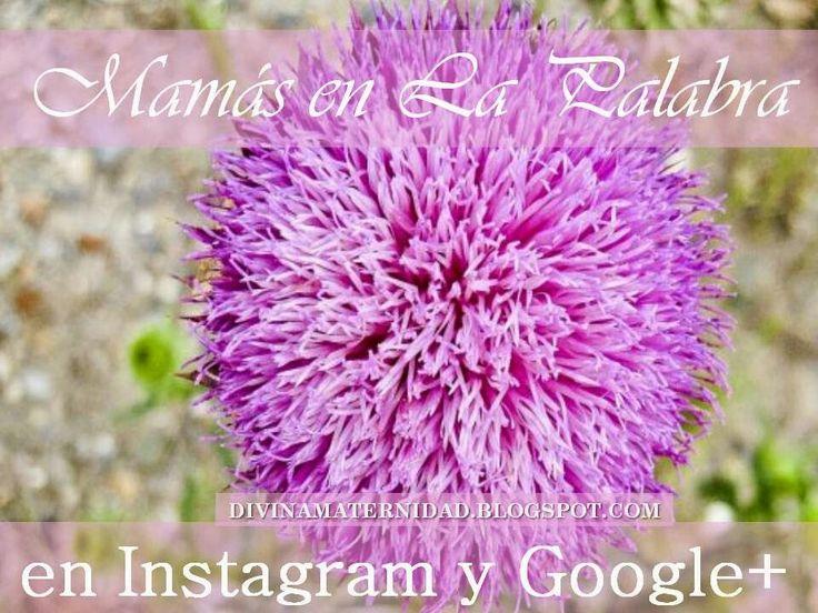 Hoy nos vinculamos en Instagram y Google+ #mamasenlapalabra http://divinamaternidad.blogspot.com/2014/07/vinculandonos-en-instagram-yo-google.html?m=1