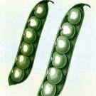A super old variety from 1800's. Still popular today - Henderson lima bush bean