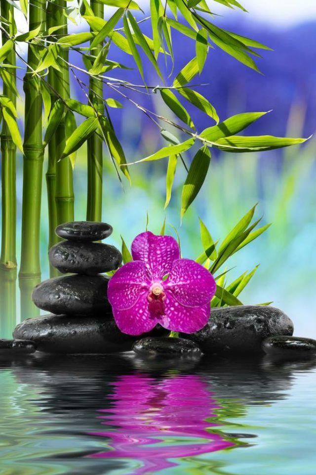 красивые картинки гиф орхидеи балочных конструкций