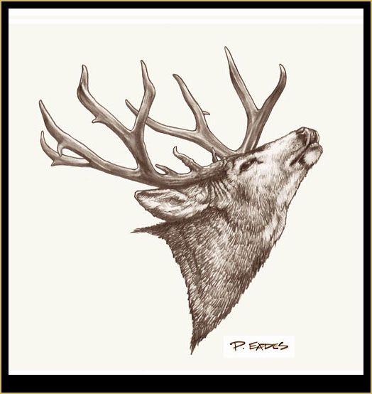 Peter Eades Original Wildlife Images   CRAFT - Drawing ...