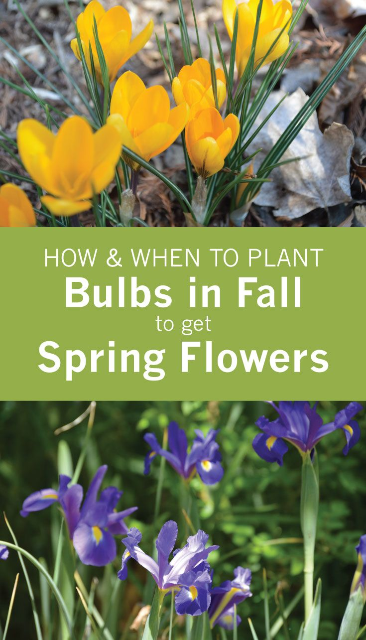 How And When To Plant Bulbs In Fall To Get Spring Flowers When