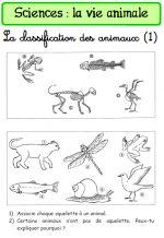 CLASSIFICATION DES ANIMAUX